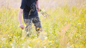 Children picking flowers on a meadow stock photo