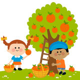 Children picking oranges Royalty Free Stock Images