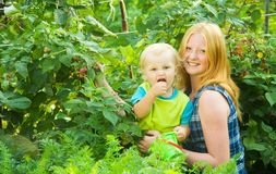 Children is picking  raspberry Royalty Free Stock Images