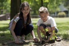 Children planting Stock Photography