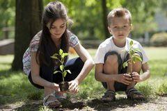 Children planting. A new tree. Concept: new lifew, environmental conservation Royalty Free Stock Image