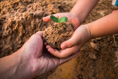 Children planting forests to reduce global warming. Children planting forests to reduce global warming, Concept afforest Stock Image