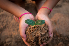 Children planting forests to reduce global warming. Children planting forests to reduce global warming, Concept afforest Stock Photography