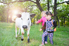 Children play with a bull in the forest. cattle stock photography