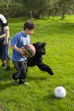 Children play with dog. Children on lawn play with dog royalty free stock photo