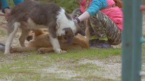 Children play with dogs slow motion video stock video footage