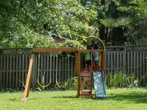 Children on play structure. Two children on play structure with swings and slide in backyard Stock Photos