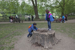 Children play on tree stump in st james`s park in london Royalty Free Stock Photos