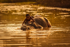 Children play with water buffalo Royalty Free Stock Image