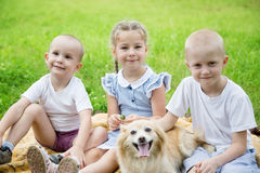 Children playing with a cat and a dog on the lawn Stock Images