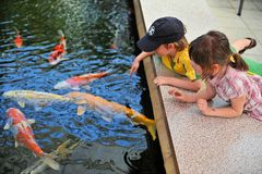Children playing with fishes. Two young children lean on the edge of a fish pond, marvelling at the Koi fish swimming around in the water Royalty Free Stock Photography