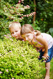 Children playing hide and seek in garden Stock Photos