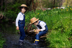 Children, playing on little river with ducklings Stock Image