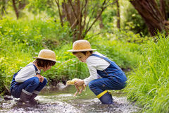 Children, playing on little river with ducklings Stock Images