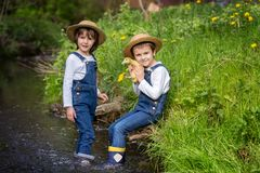 Children, playing on little river with ducklings Royalty Free Stock Image
