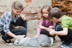 Children playing with rabbit Royalty Free Stock Photos
