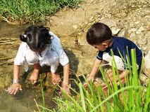 Children playing in stream. Young Asian boy and girl playing in stream outdoors Royalty Free Stock Photo