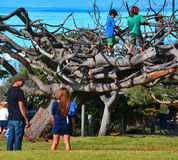 Children Playing in Tree. With parents standing and watching Stock Photo