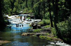 Children playing in a wood shaded river stock images