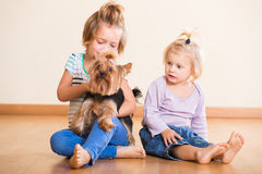 Children playing with yorkshire terrier at home Stock Image