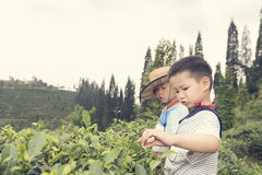 Children pluck tea leaves Royalty Free Stock Photography