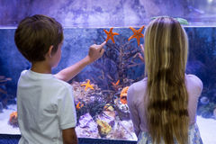 Children pointing at starfish in tank Stock Photos