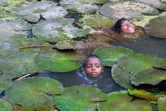 Children in a pond Stock Photo