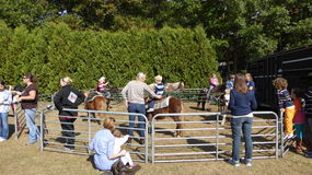 Children pony rides Royalty Free Stock Photos
