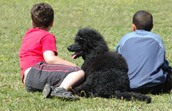 Children with poodle. Rear view of two boys and black poodle dog on grass field Royalty Free Stock Image