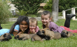 Children and puppies. Three smiling children and young puppies purebred belgian shepherd malinois Stock Photography