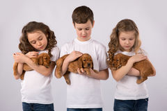 Children with red puppies isolated on white background. Kid Pet Friendship Royalty Free Stock Photos