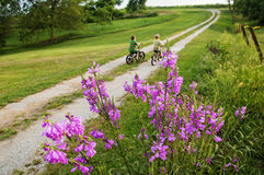 Children riding bikes country lane flowers Royalty Free Stock Images