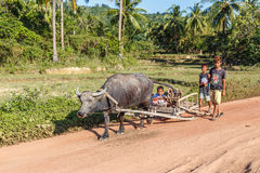 Children riding home from work with the carabao Royalty Free Stock Images