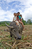 Children riding water buffalo Stock Photos