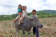Children riding water buffalo Royalty Free Stock Photo