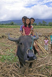 Philippines - Children Riding Water Buffalo Stock Photos