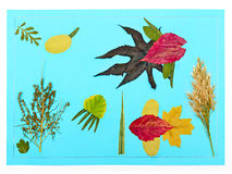 Children's application from autumn leaves Royalty Free Stock Photo