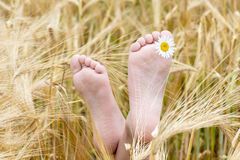 Children's barefoot in a field of barley Stock Photography