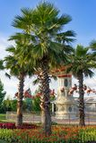 Children`s carousel among palm trees Royalty Free Stock Photography
