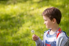 Children's Day.  Sweet little boy blowing dandelion. In the park Royalty Free Stock Photos