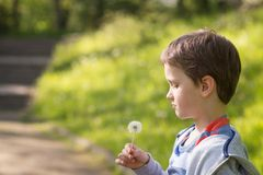 Children's Day.  Sweet little boy blowing dandelion. In the park Royalty Free Stock Image