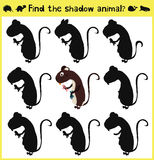 Children's developing game to find an appropriate shadow forest nutria. Vector. Illustration Stock Images