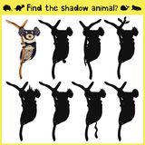 Children's developing game to find an appropriate shadow marsupial animal koalas on the tree. Vector. Illustration Royalty Free Stock Images