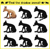 Children's developing game to find the proper shadow of a Jackal or wolf. Vector. Illustration Royalty Free Stock Photos