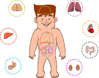 Children's digestive system Stock Images
