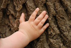 Children's hand is located on an old stump Stock Images