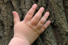 Children's hand is located on an old stump Royalty Free Stock Images