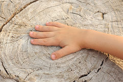 Children's hand Stock Image