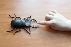 Children`s hand stretches to the toy beetle. bite or not. the ch. Ild will know the world around him royalty free stock image