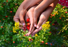 Children's hands with flowers Royalty Free Stock Photos